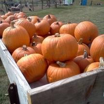 ubf pumpkins wagon